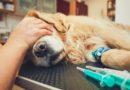 Anestezie, narkóza psa a kočky