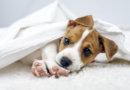 Péče o štěně