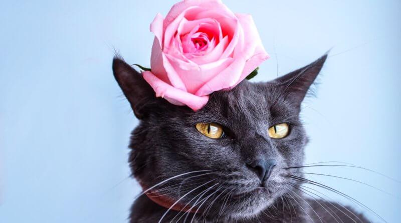 Nemoci starých koček