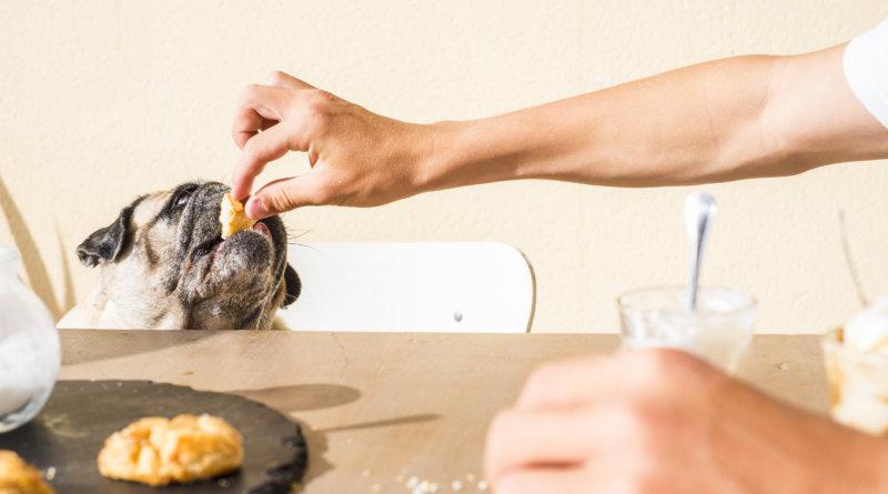 7 důvodů, proč se psovi nebo kočce nedaří zhubnout