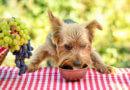 Může pes hroznové víno a rozinky?