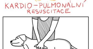 První pomoc pro psa i kočku: resuscitace