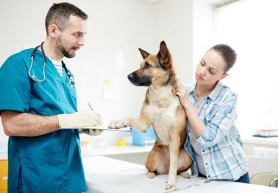 Dysplazie loketního kloubu psa DLK